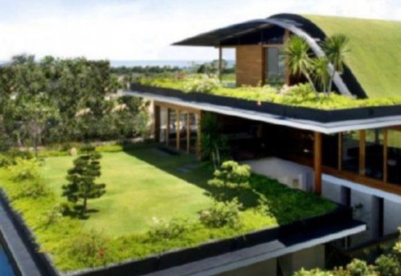 Cosa sono i tetti verdi